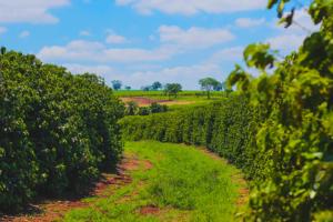 コーヒー豆の種類と産地を知っていますか?味の違いと特徴をカフェ店長が解説